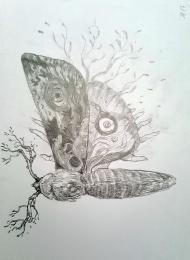 Moth Jana Heidersdorf - szkic  - obrazek