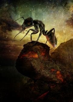 """Revival"" - Ant - François Vaillancourt - obrazek"