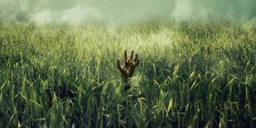 Netflix wyprodukuje W wysokiej trawie - obrazek