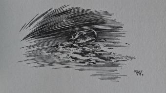 Bernie Wrightson - Cycle of Werewolf 30 - obrazek