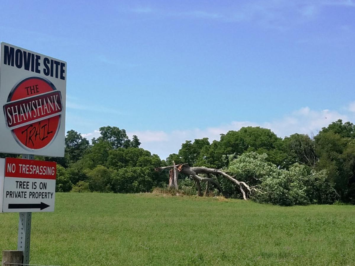 Drzewo ze Skazanych na Shawshank powalone (zdjęcie Jodie Snavely) - obrazek
