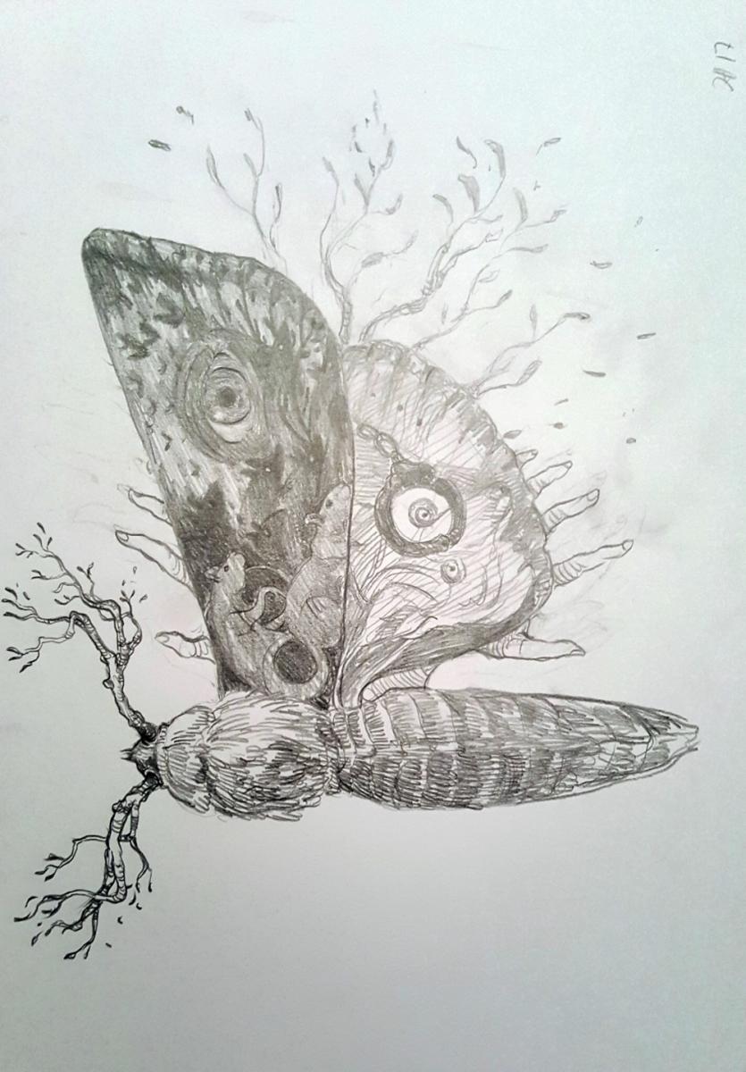"""""""Moth"""" szkic ilustracji do wydania limitowanego powieści """"Sleeping Beauties"""" - obrazek"""