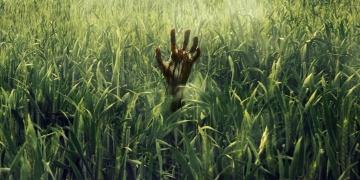 W wysokiej trawie - co poszło nie tak? - obrazek